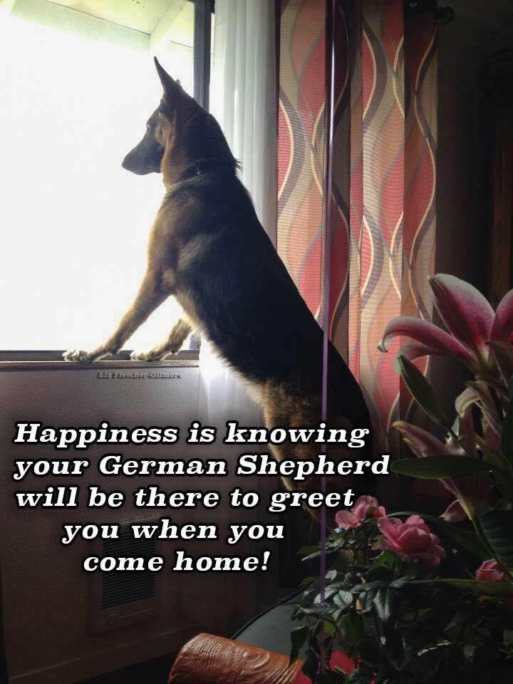 90 German Shepherd Quotes And Sayings Pupstoday
